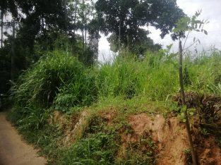 Super Land for sale in Pilimathalawa