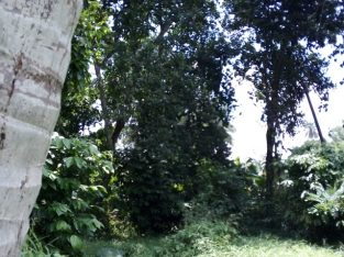 Super Land for sale in Kandy