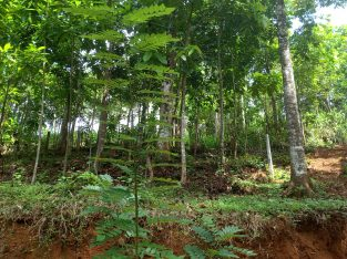 Land for sale in Ethgala, Gampola