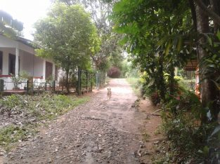 Land for Sale Pilimathalawa