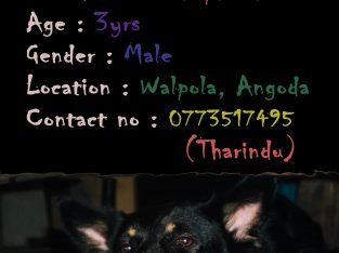 Looking for female dog for crossing