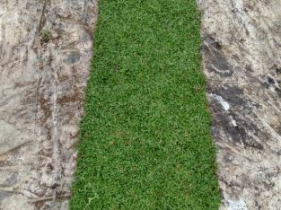Landscaping and Grass