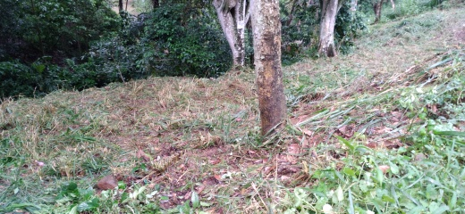 land for sale in peradeniya